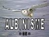 Albinisme.