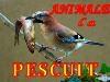 Animale La Pescuit. 02