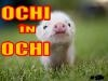 Ochi In Ochi. 15