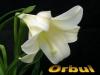 Orbul