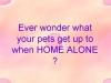 Pets Home Alone